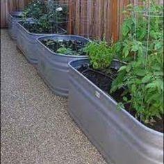 Garden troughs.  My idea of raised bed gardening.