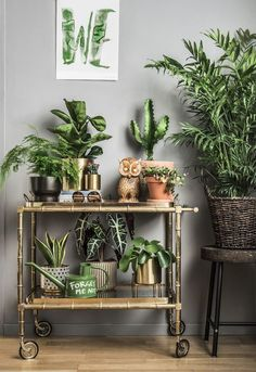 Home Decoration Handmade Four Amazing Benefits Of Keeping Indoor Potted Plants.Home Decoration Handmade Four Amazing Benefits Of Keeping Indoor Potted Plants Interior Plants, Interior Design, Plantas Indoor, Deco Nature, House Plants Decor, Green Plants, Indoor Plants, Potted Plants, Foliage Plants