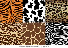 7 different animal print | February 2012 ~ Chuii's Testimony