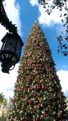 The Christmas tree at the Americana at Brand in Glendale, CA (near Los Angeles).  Over 100' tall.