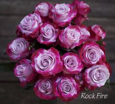 Rock Fire Rose by Harvest Wholesale