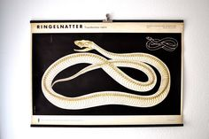 Vintage XXL school pull down chart map snake viper East German GDR zoology print Berlin. €180.00, via Etsy.