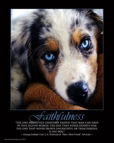 """faithfulness ~  ~  ~  """"THE ONE ABSOLUTELY UNSELFISH FRIEND THAT MAN CAN HAVE IN THIS SELFISH WORLD, THE ONE THAT NEVER DESERTS HIM, THE ONE THAT NEVER PROVES UNGRATEFUL OR TREACHEROUS - IS HIS DOG.  ~GEORGE GRAHAM VEST, US POLITICIAN AND """"MAN'S BEST FRIEND ADVOCATE.~"""