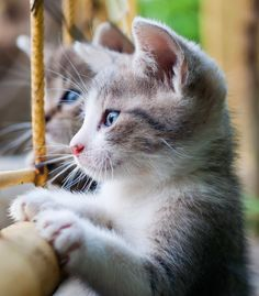Before You Get a Kitten… — Jackson Galaxy