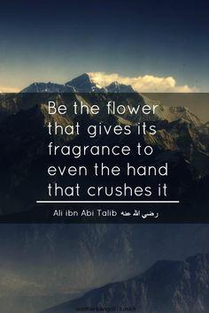 Flower, tolerance, forgiveness, islamic wisdom