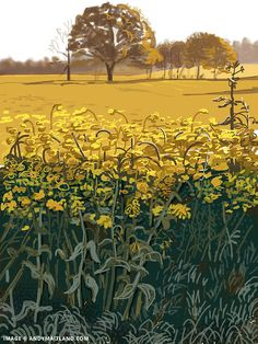 Yellow field, near Abinger Hammer, Surrey. iPad painting, Spring 2012 by Andy Maitland.