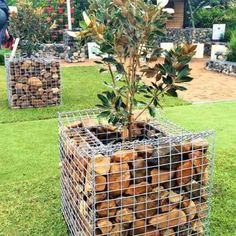 Queensland Garden Expo, In addition to the gabion wall installation we custom made 2 commercial style gabion planters for a red carpet entrance to the display