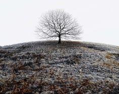 yama-bato:  Tamas Dezso  Tree  Romania © Tamas Dezso