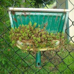 Repurposed rusty dust pan.