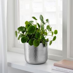 IKEA - VINDFLÄKT, Plant pot, silver color, Decorate your home with plants combined with a plant pot to suit your style. Container Gardening Vegetables, Succulents In Containers, Container Flowers, Container Plants, Vegetable Gardening, Organic Gardening, Ikea Planters, Fall Planters, Planter Pots
