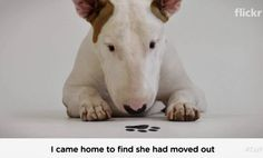 Rafael Mantesso's wife left him with white walls and his bull terrier, Jimmy. The result changed the course of his life and turned Jimmy into a Jimmy Choo fashion Icon.