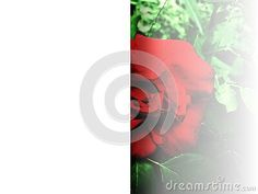 background-cut-two-parts-first-one-white-other-one-has-red-rose-surrounded-green-leaves-image-useful-cards-banner-stationery-wallpaper-blog-posts-brochure Leaf Images, Green Leaves, Red Roses, Colorful Backgrounds, Posts, Wallpaper, Blog, Cards