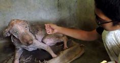 PETITION - Do not abandon your animals. Que no Abandonen a sus Animales