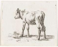 Abraham Hendrik Winter | Staand kalf, Abraham Hendrik Winter, 1815 - 1860 |