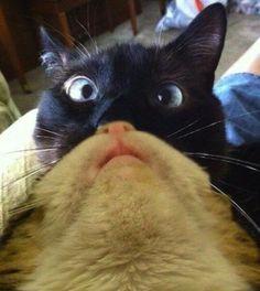 Cat Beards on Cats