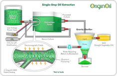 OriginOil's Modest Plan To Make Money Off Oil From Algae