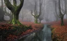 Otzarreta Forest, Basque Country, Spain - 15 Mysterious Forests You Would Love to Get Lost In Fairy Tale Forest, Mystical Forest, Beautiful Forest, Beautiful World, Beautiful Places, Landscape Photography, Nature Photography, Art Sculpture, Basque Country