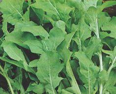Semine di SETTEMBRE 2017 - Coltivare l'orto