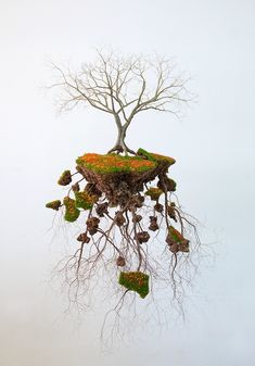 <p>Cuban expatriate artist living and working in Mallorca, Spain, Jorge Mayet recreates with beautiful precision trees and root structures using papier-maché, paints, wires and metals. Devoided of pol