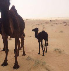 My Time in Saudi Arabia, Part I | New York Social Diary