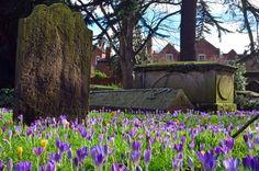 St Chad's graveyard, Shrewsbury. Photograph: pippi77