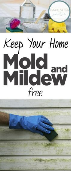 Keep Your Home Mold and Mildew Free