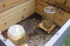 Mason Jar Bee Feeder