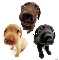dog studio fisheye - Google Search