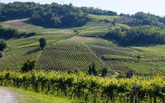 Mercato del vino. Nell'Oltrepò Pavese Cantina di Soave pronta ad acquisire La Versa - Gambero Rosso  http://www.gamberorosso.it/it/news/1030698-mercato-del-vino-nell-oltrepo-pavese-cantina-di-soave-pronta-ad-acquisire-la-versa