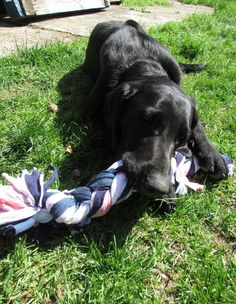 Recycled t-shirt dog toy, so very easy to make!