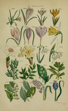 BioDivLibrary, Welcome to my gardening blog http://www.facebook.com/flowerindoorgardening #flower