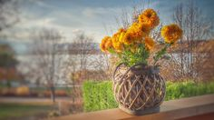 Orange Clustered Petaled Flowers in Brown Wicker Pot on Brown Wooden Plank  Free Stock Photo