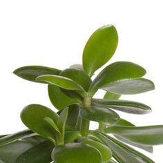 indoor house plants with names and pictures | indoor house plants