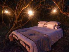 Star Gazer Camp is located inside one of Bellevue Forest Reserve's long forgotten railway culverts. Accommodation is provided in 2 rustic, outside suites. Breakfast, lunch, and dinner are provided and included in the price of the accommodation.
