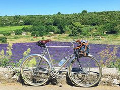 romantic and nostalgic about the combination of lavender and a bicycle. welcome to the Purple world