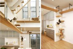 9 of the Craziest Cat-Climbing Structures in the World - Debra Luckau - Playground House Design, Cat Room, Cat House, Decor, Furniture, House, Home, Shelves, Contemporary House