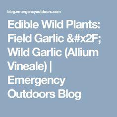 Edible Wild Plants: Field Garlic / Wild Garlic (Allium Vineale)   Emergency Outdoors Blog