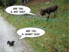 donkey jokes?