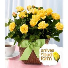 proflowers free standard delivery