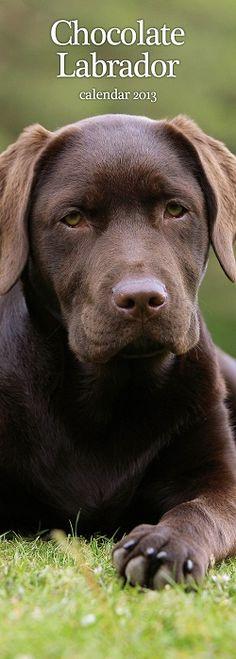 Labrador Retriever Kalender Bruin Slimline 2013