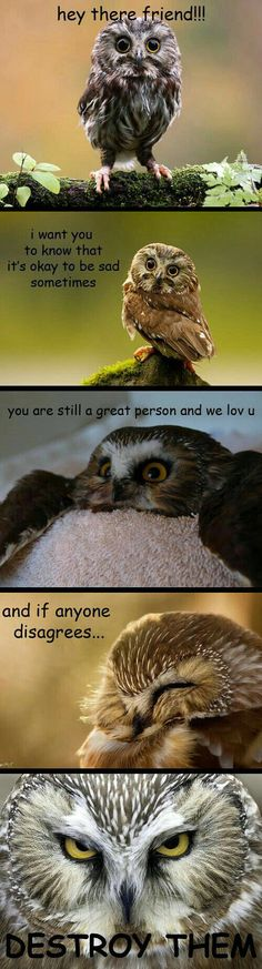 Owls knows what's up