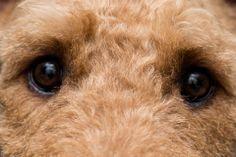 Those eyes! Photo courtesy of Jim White