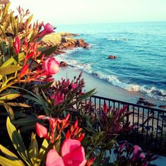 Woods Cove, Laguna Beach....my favorite place in the world  <3
