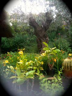 particolare del mio giardino