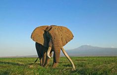 Environment Secretary wants all Ivory Banned