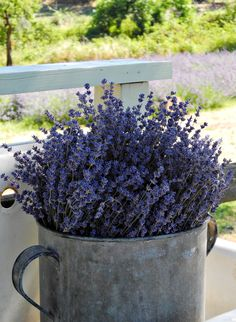 Bunches of lavender in galvanized containers