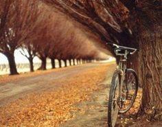 Otoño bici