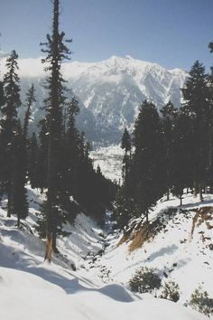 Snow + mountains + tall pine trees = where I want to be