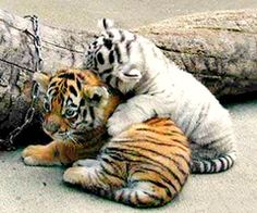 rawr... Can please have them please???