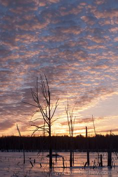 Sunset clouds over a frozen wetland in Middletown, New York.
